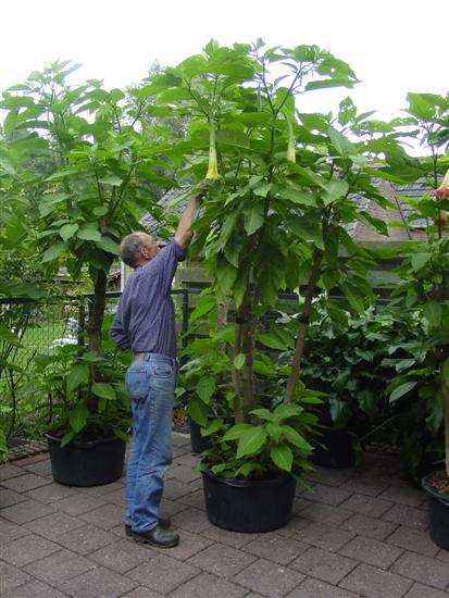 Grote Potplanten Voor Buiten.Main